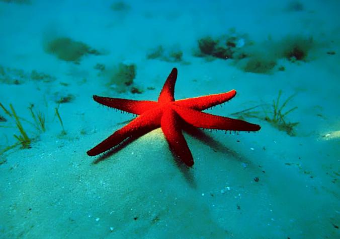 Starfish_Giuseppe-Aniello_FCC